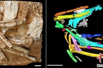 亚洲最陈旧沙鸡化石提醒600万年前青藏高原生态
